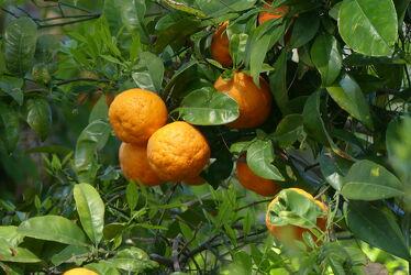 Bild mit Orange, Natur