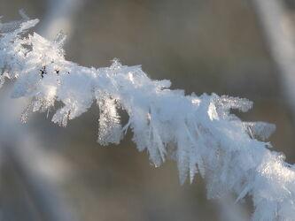 Bild mit Winter, Schnee, Winteraufnahmen, Winteraufnahmen, Winterzeit, Winterbilder, Frost, Winterwelt, Wintertag, Unschärfe, Schneeflocken, Zweig, Schärfe