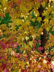 Bild mit Gelb, Rot, Herbst, Blätter, Herbstblätter, Landschaften im Herbst