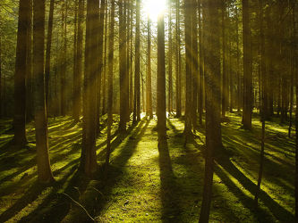 Bild mit Natur, Herbst, Sonne, Wald, Ruhe, Moos
