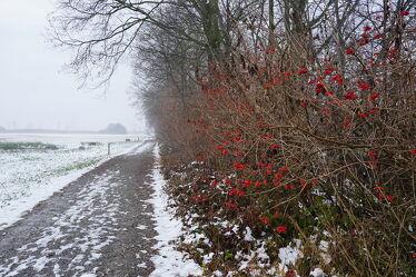 Bild mit Waldrand, Vogelbeere, winterlandschaft