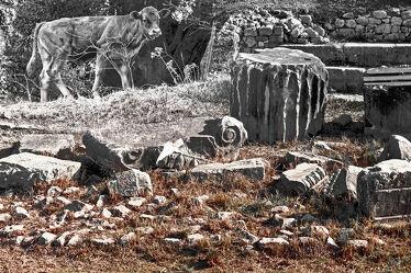 Bild mit Natur, Weiden und Wiesen, Steine, Kuh, Fragmente