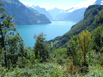 Bild mit Natur, See, Schweiz, Vierwaldstättersee