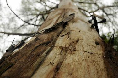 Bild mit Holz, Baum