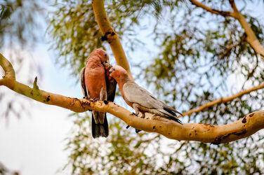 Bild mit Vögel, Tier