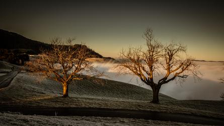 Baum über Nebelmeer