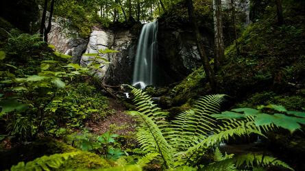 Bild mit Wald, Waldlichtung, Wasserfall, Landschaften & Natur, farnblatt