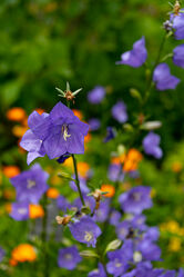 Bild mit Pflanzen, Blumen, Blume, Pflanze, Feldblume, Feldblumen