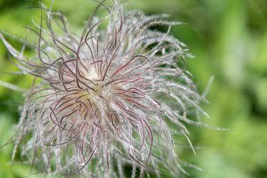 Bild mit Pflanzen, Blumen, Makrofotografie, Makroaufnahme, Blume, Pflanze, Makro