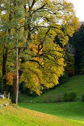 Bild mit Natur, Bäume, Herbst, Laubbäume, Baum, Laubbaum, Herbstblätter, Goldener Herbst, Herbststimmung, herbstlich