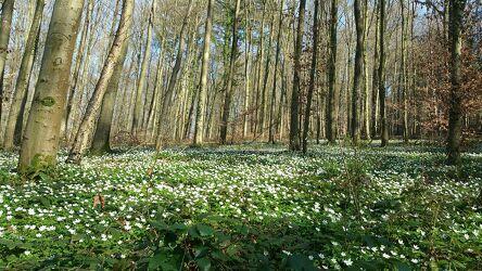 Bild mit Bäume, Blumen, Wald, Waldlichtung, Waldblick, sommerblumenwiese