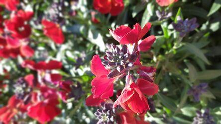 Blumen Blühten