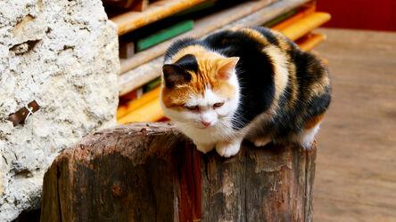 Bild mit Augen, Tier, Katze, macro, Fell, Haustier, hauskatze, verspielt
