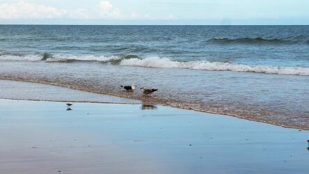 Bild mit Brandung, Wellen, Sand, Tageslicht, Strand, Seevogel, Reflexionen, Algarve