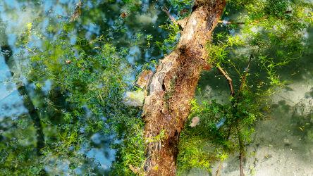 Bild mit Wasser, Reflexion, Baumstamm, Wasser & Wasserpflanzen, Farbenspiel, Wasseroberfläche, lichtdurchflutet