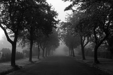 Bild mit Natur, Landschaften, Bäume, Nebel, Baum, Weg, Görlitz, Allee