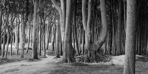 Bild mit Wald