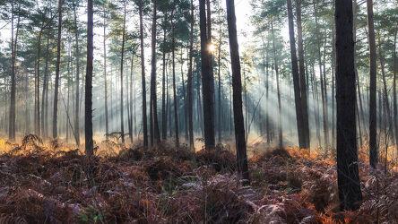 Bild mit Herbst, Sonnenaufgang, Wald, Landschaft, Sonnenstrahlen, Sonnenlicht, Lichtstimmung, Niedersachsen, Friedwald, Bremer Schweiz