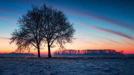 Bild mit Bäume, Winter, Sonnenaufgang, Landschaft, winterlandschaft, Lichtstimmung, Hammeniederung, Teufelsmoor, Winterstimmung, Ritterhude