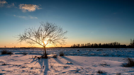 Bild mit Winter, Schnee, Sonnenuntergang, Baum, Panorama, Landschaft, Lichtstimmung, Hammeniederung, Teufelsmoor, Osterholz Scharmbeck