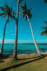Palmen und Meer Koh Kood