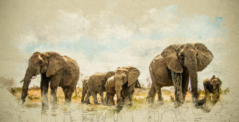 Bild mit Tiere, Elefant, Afrika, Herde, Nationalpark, Jungtier, safari, digital, Painting
