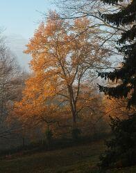 Bild mit Herbst, Herbstblätter, Landschaften im Herbst, Herbstlicht, Goldener Herbst, herbstlich, Herbstwald, Herbstwald, Herbstgarten, Herbstidylle