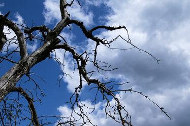 Bild mit Natur, Himmel, Bäume, Wolken