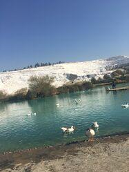 Bild mit Hügel, Entenvögel, Kalkalpen