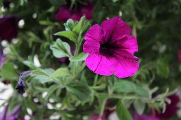 Bild mit Pflanze, blüte, pink