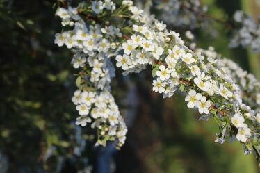 Bild mit Natur, Pflanze, Strauch, Blüten