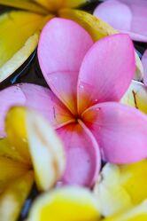 Bild mit Blumen, Makrofotografie, Makroaufnahme, Makro, Flower, Flowers, Reisefotografie, Blumenbild, Blumenbilder