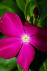 Blume / Flower