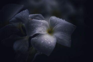 Bild mit Pflanzen, Blumen, Frühling, Makrofotografie, Flower, Flowers, Dark, dark photografic, Blumenfotografie, Marko