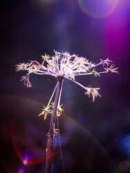 Bild mit Pflanzen, Winter, Blumen, Lila, Frühling, Makrofotografie, Flower, Flowers, Blumenfotografie, Marko