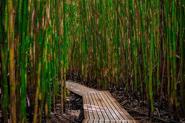 Bild mit Bambus, Impressionen, USA, bambuswald, Maui, Tropen, Hawaii
