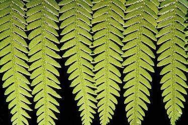 Bild mit Natur, Grün, Blätter, farn