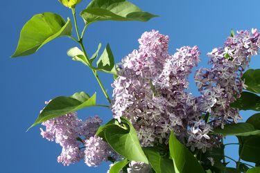 Bild mit Natur,Pflanzen,Blumen,Farben,Lila,Bäume