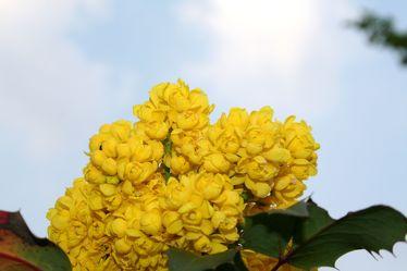 Bild mit Farben, Gelb, Natur, Pflanzen, Himmel, Bäume, Jahreszeiten, Blumen, Frühling