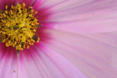 Bild mit Farben,Gelb,Natur,Pflanzen,Blumen,Rosa,Lila,Violett,Korbblütler