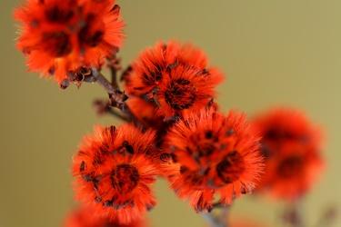 Bild mit Farben,Orange,Natur,Pflanzen,Blumen,Rot