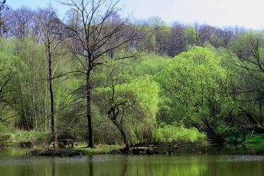 Bild mit Natur, Elemente, Wasser, Grün, Pflanzen, Landschaften, Bäume, Gewässer, Küsten und Ufer, Wälder, Seen, Flüsse