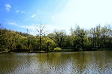 Bild mit Natur,Wasser,Bäume,Gewässer,Küsten und Ufer,Wälder,Seen,Flüsse,Teiche,Stauseen