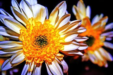 Bild mit Farben,Gelb,Natur,Pflanzen,Blumen,Korbblütler,Jahreszeiten,Frühling