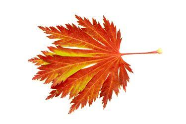 Bild mit Farben,Orange,Gelb,Gegenstände,Natur,Pflanzen,Bäume,Schmuck,Bernsteine,Struktur,Blätter,Blatt,Blattstruktur,Blätterstruktur