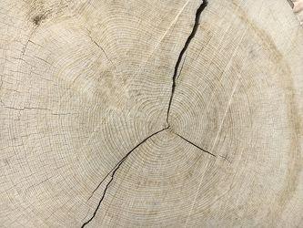 Bild mit Holz, Holz, Struktur, Struktur, Baumstamm, Jahresringe, Holzstruktur, Windriss, Holzscheibe, Eiche, Eichenholz