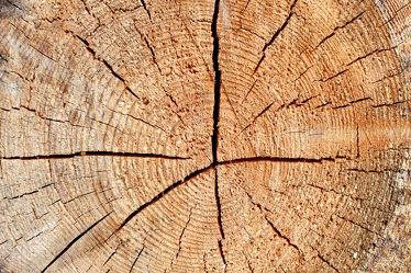 Bild mit Natur, Holz, Struktur, Kiefer, Baumstamm, Jahresringe, Holzstruktur, Windriss, Holzscheibe, Holzfliese, Fichte, Zirbenkiefer, Zirbe, Jahresring, Nadelholz, Schwundriss, altes Holz