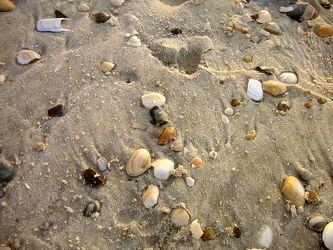Bild mit Gegenstände,Natur,Landschaften,Felsen,Materialien,Stein,Sand,Strand,Muscheln