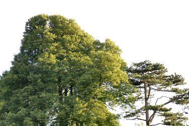 Mystic Trees 7
