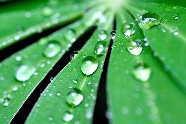 Bild mit Farben, Natur, Elemente, Wasser, Grün, Pflanzen, Gräser, Blumen, Schwarz, Wassertropfen, Regentropfen